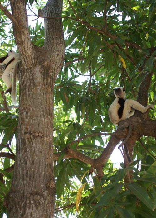 VENDS 45 LOTS Titrés & Bornés - Majunga(Madagascar)