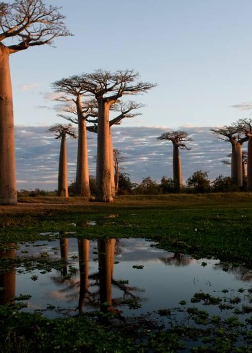 HÖHEPUNKT VON MADAGASKAR