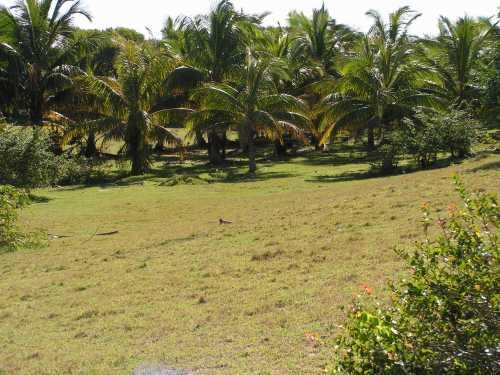 Magnifique plusieurs terrains a vendre a manakara cote-est